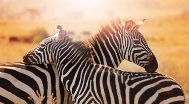 Luna de Miel en Kenia - Safari en Masai Mara + Playas de Zanzíbar