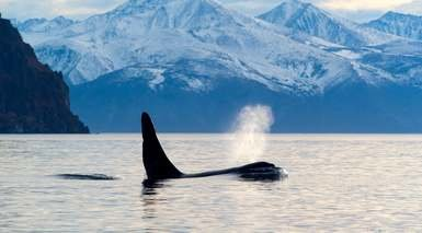 Nueva Zelanda con Excursiones + Glaciares + Safari Ballenas
