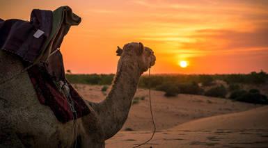 Circuito por Senegal con Excursiones y Visitas