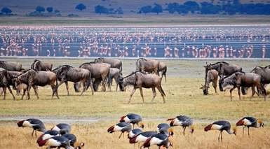 Aventura en Tanzania con 4 Safaris - Grandes Viajes
