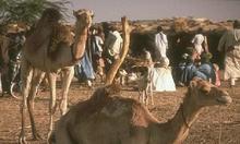 Alberghi a Africa