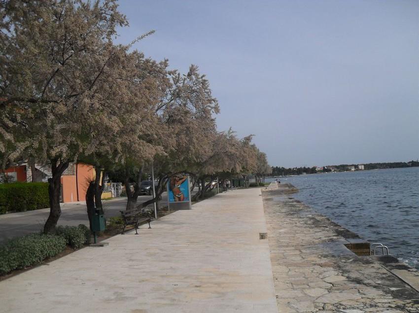 Villa Nico Zadar