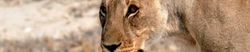 Aventura en Tanzania con 4 Safaris